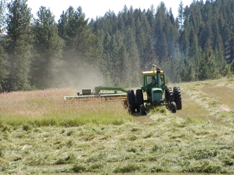 Pat Stice swathing hay into windrows